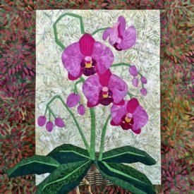 143-phalaenopsis