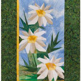 daisies139